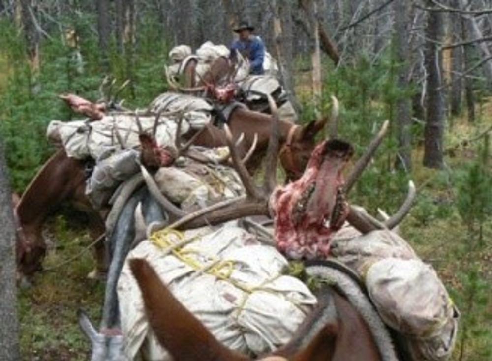 Horse string while hunting elk and deer.