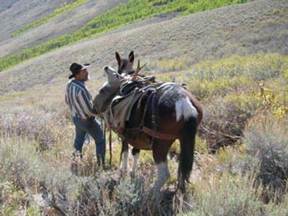 Successful mule deer hunt by horseback.