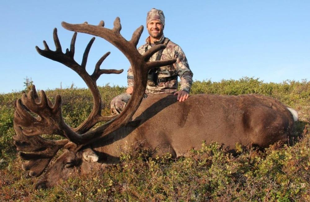 Big caribou stud