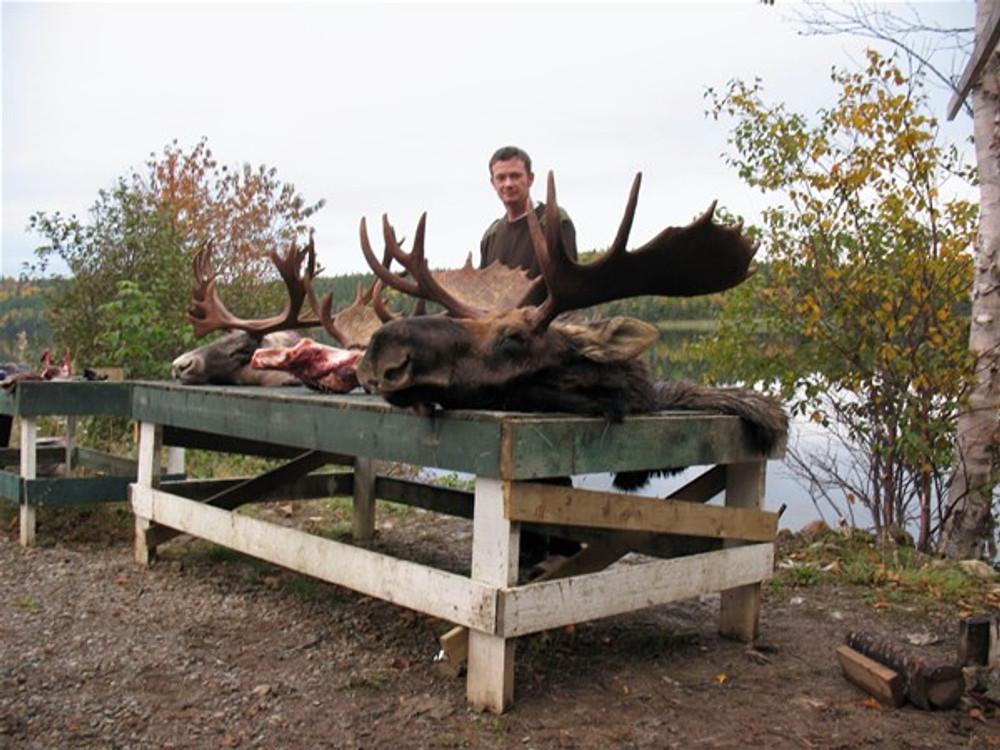 Moose down.