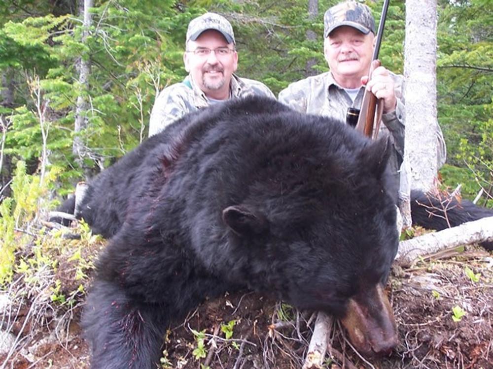 The black bear in Canada get huge.