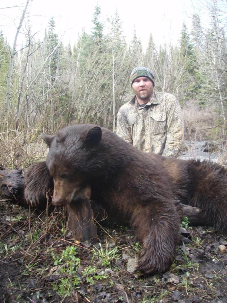 High success bear hunt.