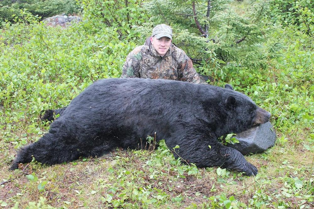 Black bear are big in Canada.