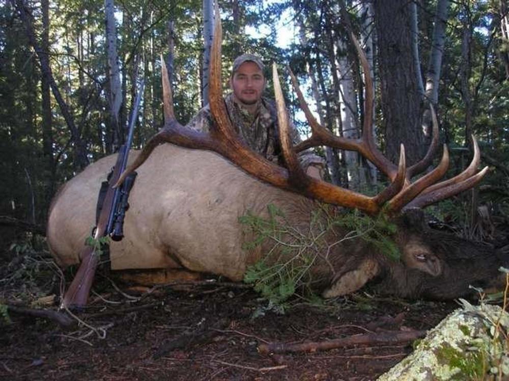 Big bull elk.