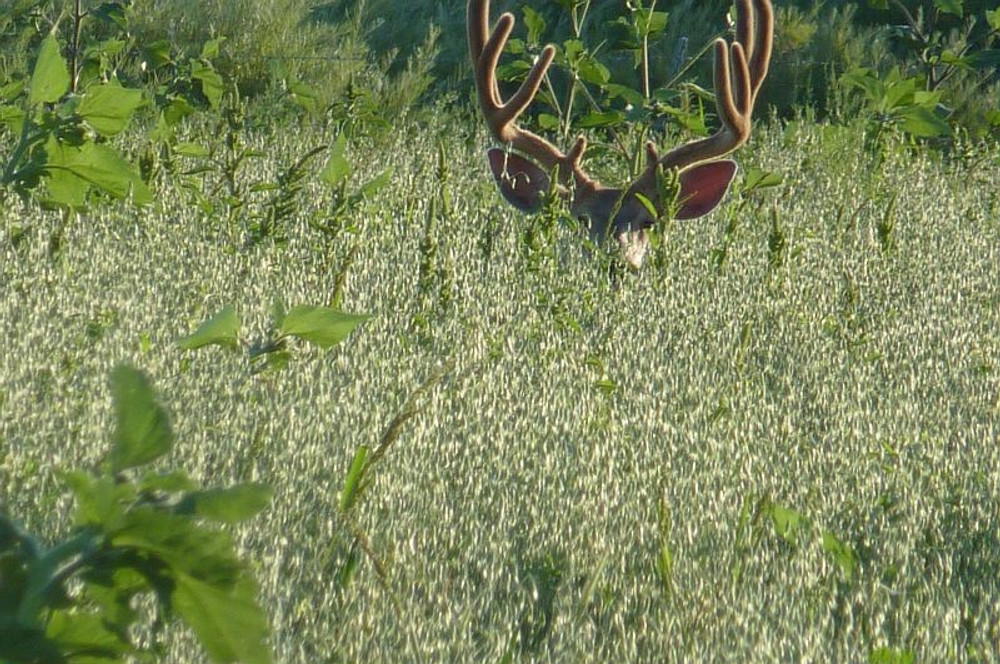 I spy a mule deer.  But then he sees you too.