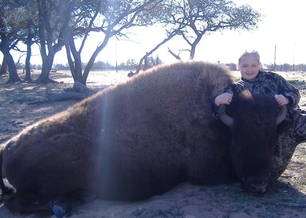 Bison hunts