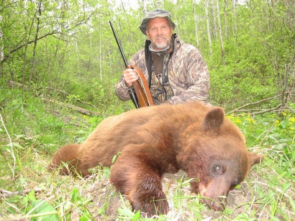 Black bear of cinnamon color.