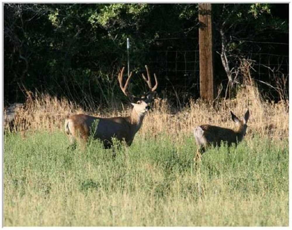 Rut is the best time to hunt deer.