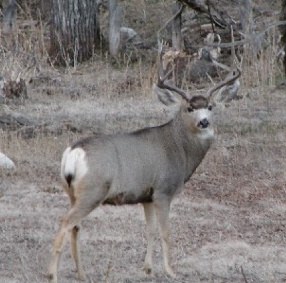 This buck isn't afraid of you.