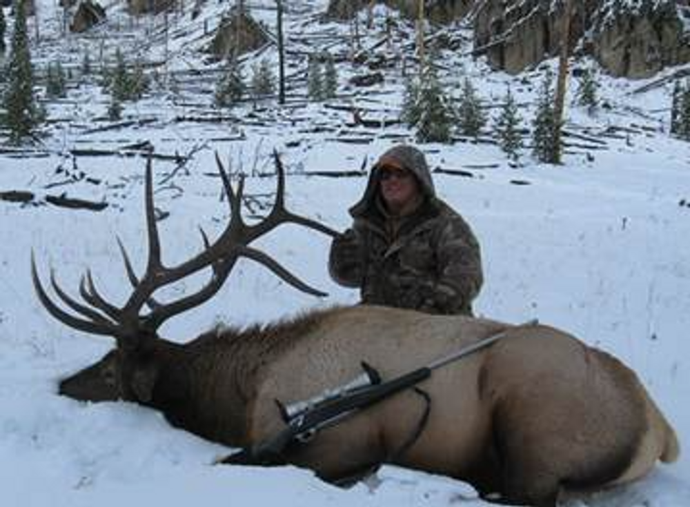 Snow brings down the elk from the high country.