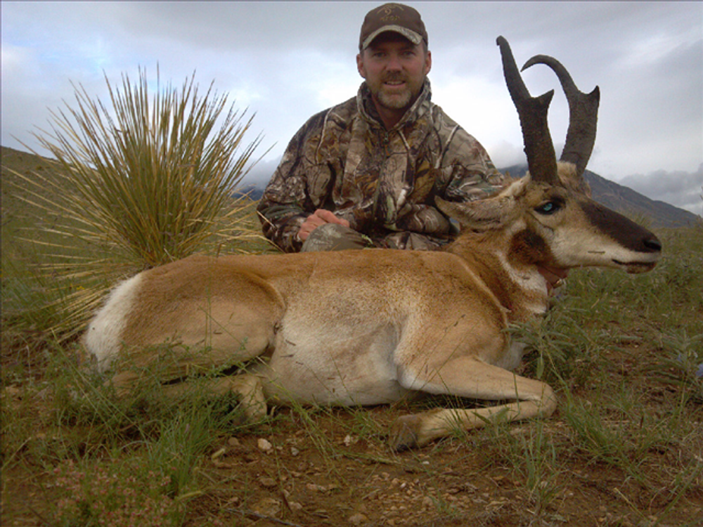 Trophy antelope in NM.