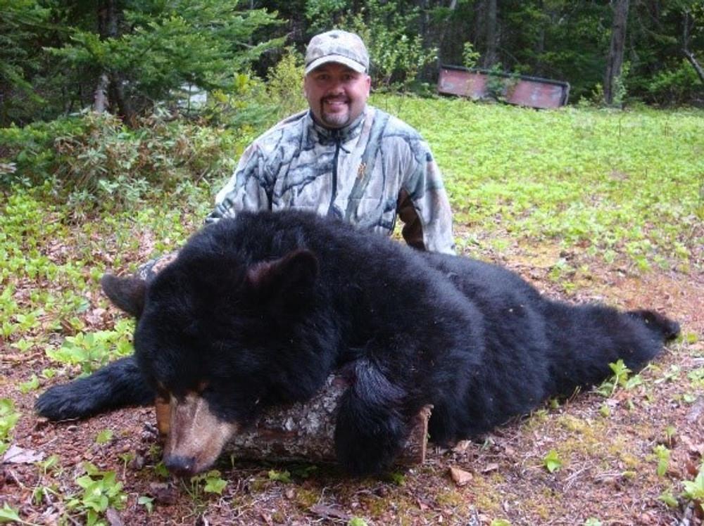 Canada black bear.