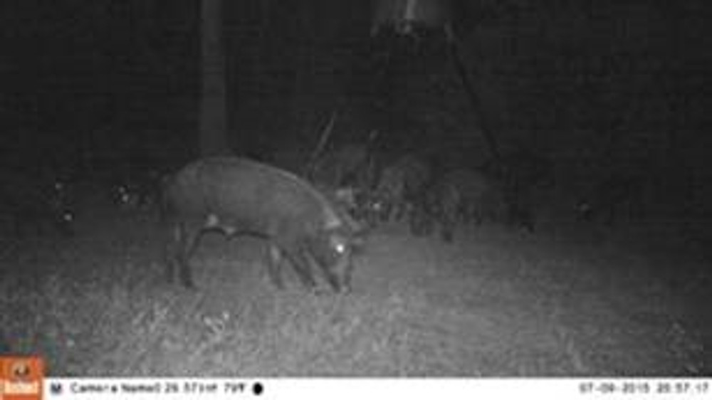 Night time hog hunts in TX.