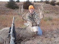 Great mule deer buck