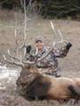 Big elk on public land.