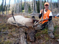 Private land bull elk.