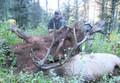 Trophy private land elk hunt.
