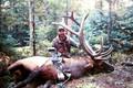 Nice big bull elk.