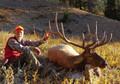 Trophy elk on DIY hunting.