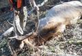 One more elk taken.