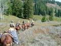 Pack-in elk and mule deer hunt.