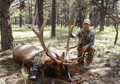 Downed 6x6 bull elk