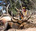 Heavy long tines on this bull elk trophy.