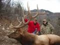 Trophy bull elk in GMU050.