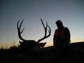 """Hunt #5109 Guided Mule Deer/Elk/Antelope on 10,000 Acres Private  170""""+ Deer"""