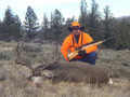 Rifle mule deer buck deer taken on private land.