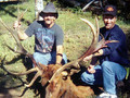 Hunt #5033 Guided Pack-in Mule Deer/Elk Horseback Private/Public