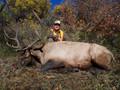 They grow elk big in Colorado.
