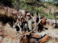 Elk hunt packing in on horses.