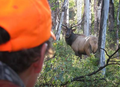 Hunt #5086 Mule Deer/Elk DIY Drop Camp