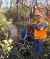 Scrub oak elk from a semi-guided hunt.