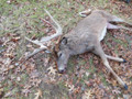 Hunt #5081 DIY Elk/Deer Cabin on 500 Ac Private