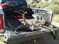 2 successful deer hunters.