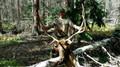 Trophy elk hunts