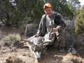 Wide and tall trophy mule deer buck.