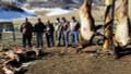 Successful week of elk hunting.