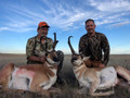 Double trouble for these two antelope bucks.