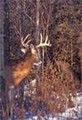 Hunt #9004 Guided Mule Deer/Whitetail/Antelope 14,000 Ac Private