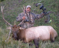 Another archery hunter with his elk.