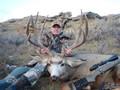 Nice wide, tall and heavy mule deer buck.