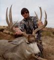 Unique antlers for a mule deer buck.