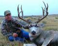 Trophy mule deer.
