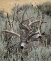 Hunt #6013 Guided Whitetail/Mule Deer 100,000 Ac Private 4x4 or Better Only