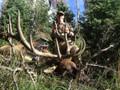 Successful bull elk hunt in New Mexico.