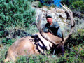Tall, narrow and heavy antlered archery bull elk.