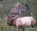 First time bull elk with a bow.
